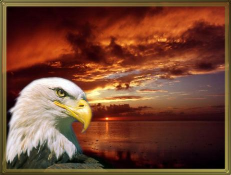 eagle at sunset=