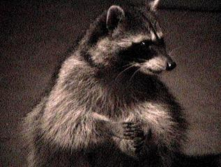 rockycoon
